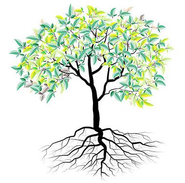 幹細胞のイメージ
